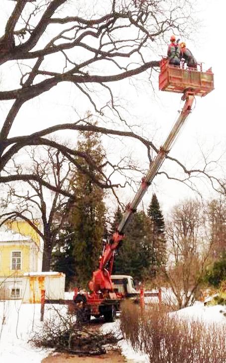 Услуги автовышки для деревьев